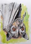 Inktober Day 10 - Fruit Bat