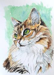 Inktober Day 12 - Domestic Cat by Harmony1965
