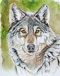 Inktober Day 23 - Wolf by Harmony1965