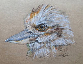 kookaburra sketch
