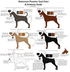 Doberman Pinscher Coat Color and Anatomy Guide by xLunastarx