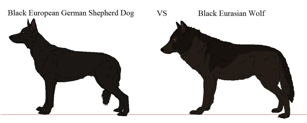 wolf vs german shepherd size superman logo outline clip art superman logo outline clip art