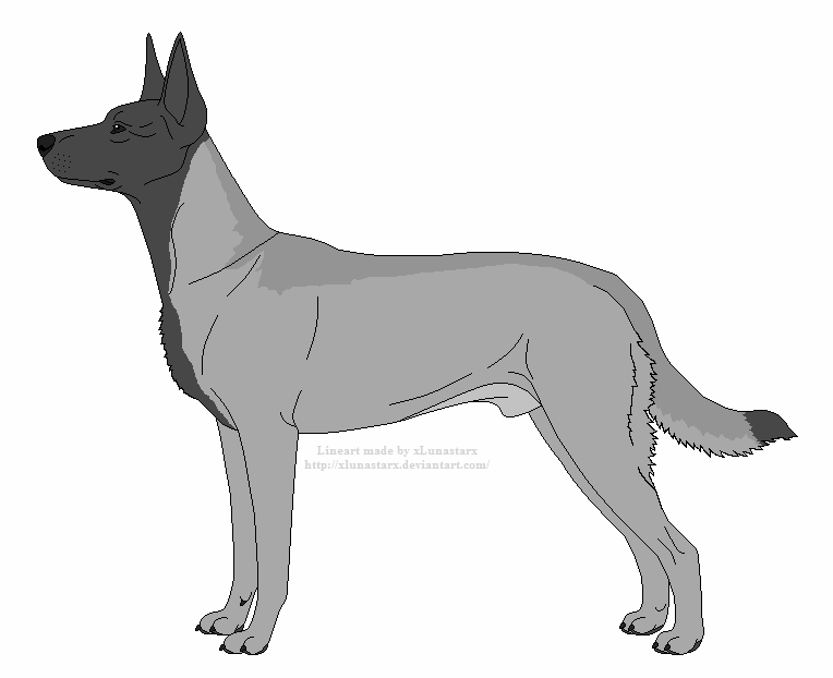 Malinois coloring page | Coloring pages | 622x764