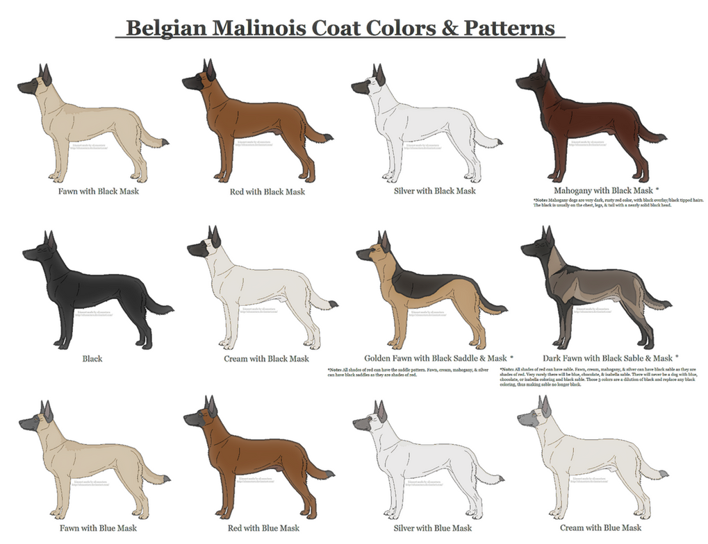 Belgian Malinois Coat Colors And Patterns By Xlunastarx On