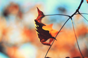 Hither Comes the Fall by Sunira