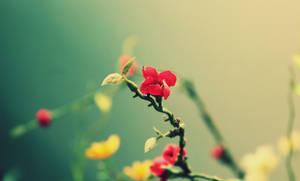 Le Fleur Rouge