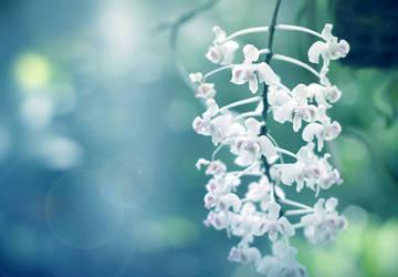 Soft Orchids by Sunira