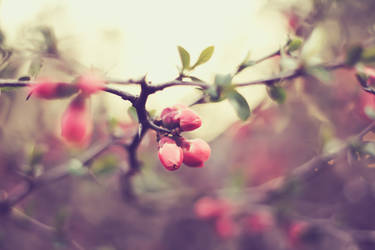 Pretty in Pink by Sunira