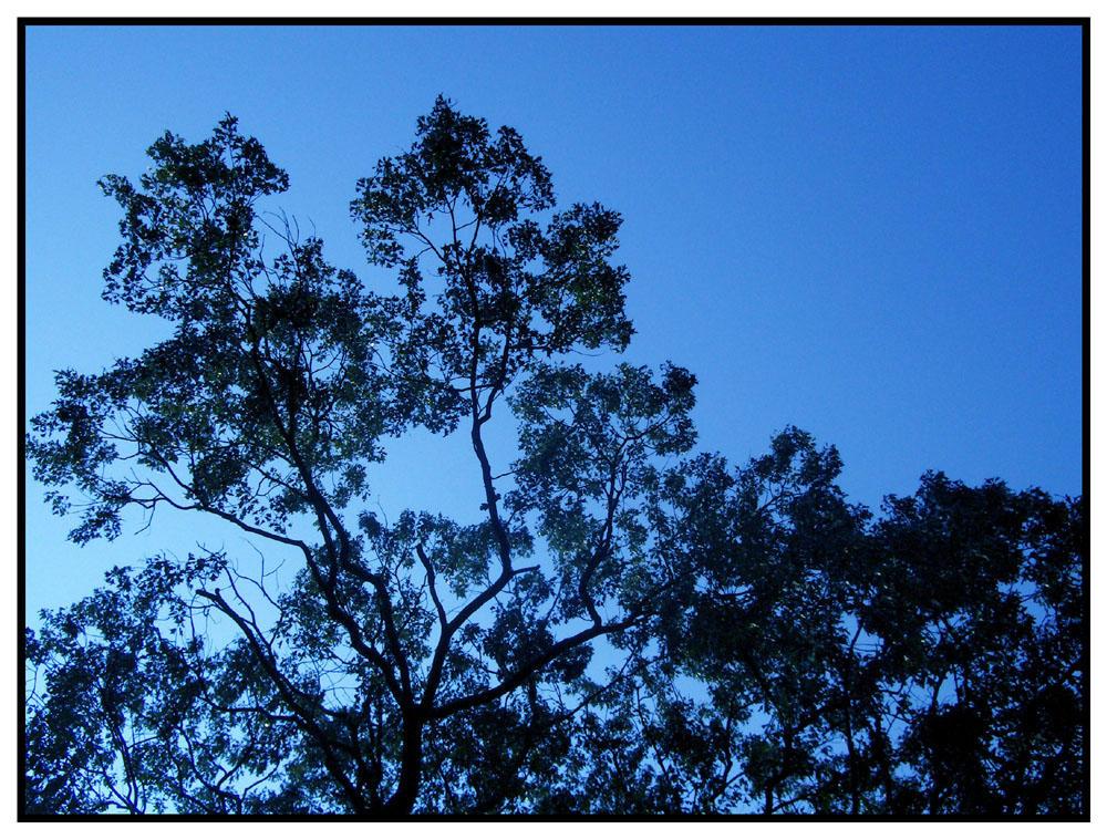 Blue Phorphorus Sky by Sunira