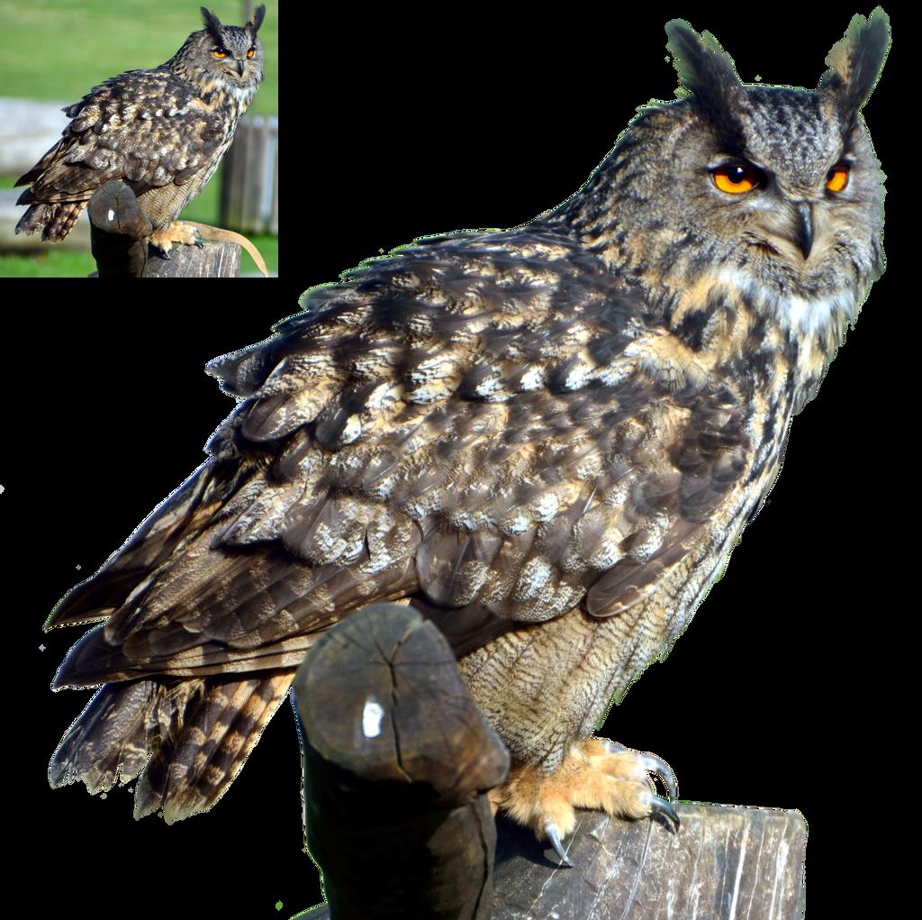 Eagle Owl 2 Png by lumpi69 on DeviantArt