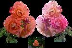 Rose Variation 4