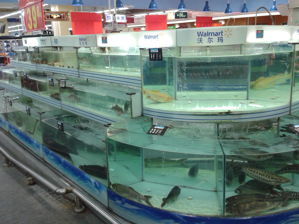 Dalian china fish at walmart by thingy me jellyfis on for The fish store