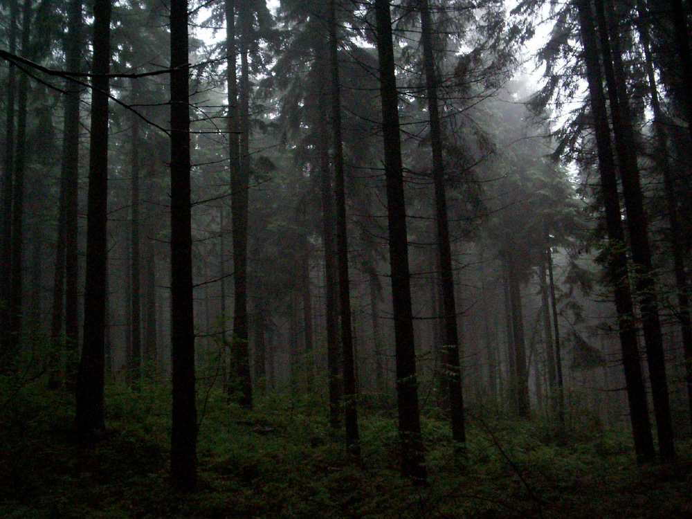 Fog in deep forest I by Vrolok-stock