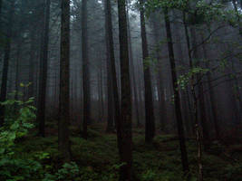 Fog in deep forest II by Vrolok-stock