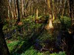 Swamps II