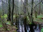 Swamps IX