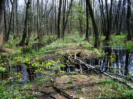 Swamps XVI by Vrolok-stock