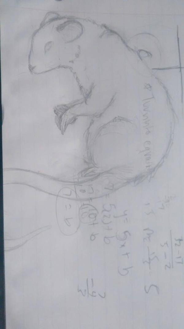 Math Rat by WolfShadow567