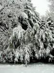 Snow-e-oh.