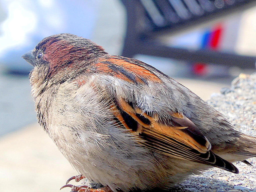Fat bird.