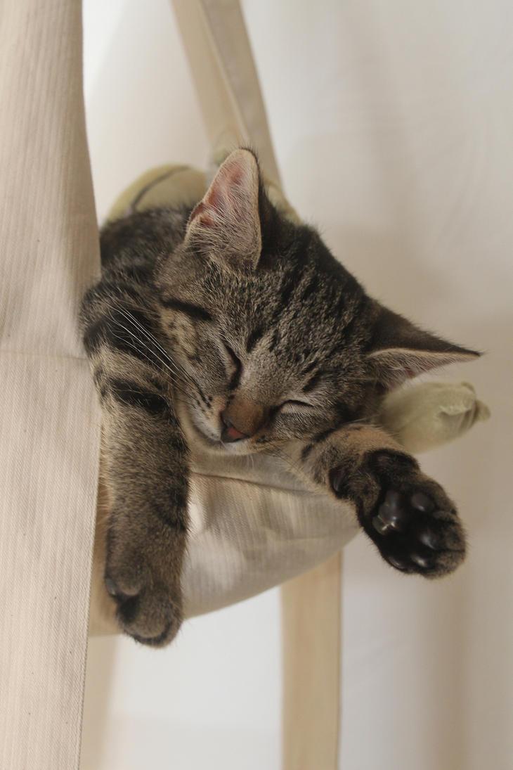 Kitten Check How Long Until Cat Osrs