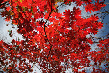 Autumn by Max-CCCP
