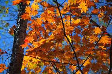 Autumn 3 by Max-CCCP