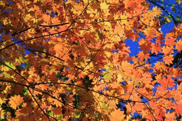 Autumn 4 by Max-CCCP