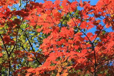Autumn 5 by Max-CCCP