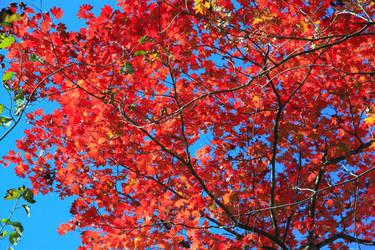 Autumn 6 by Max-CCCP