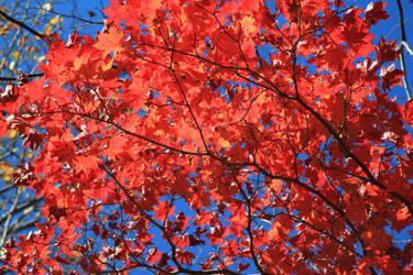 Autumn 7 by Max-CCCP