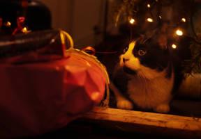 Christmas Cat by MaraudingMaster