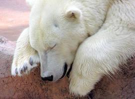 Polar Bear by rwgp