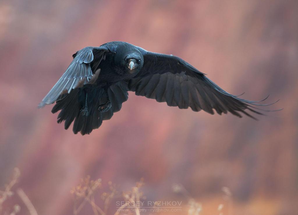 Raven Flight Nude Photos 75