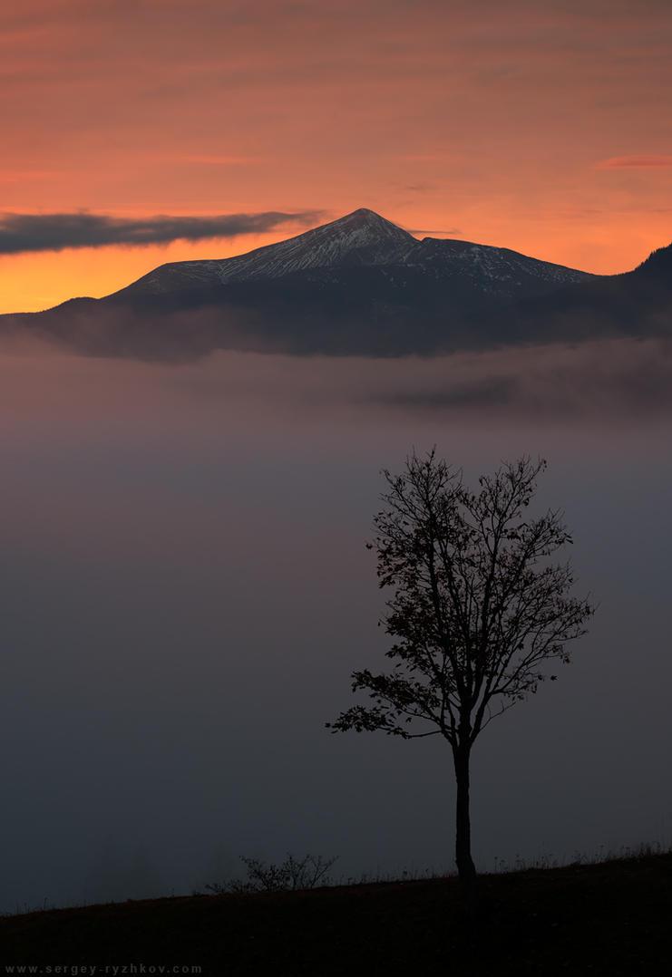Lonely tree on background of morning Hoverla mount by Sergey-Ryzhkov