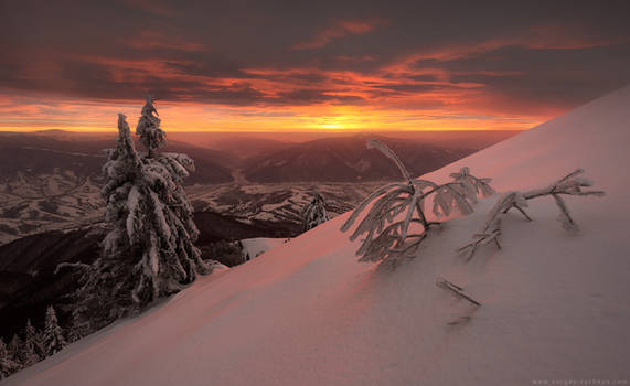 Snowy trees on background of amazing sunset in win