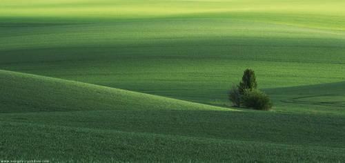 Spring green field and tree. Ukraine, Volhynia