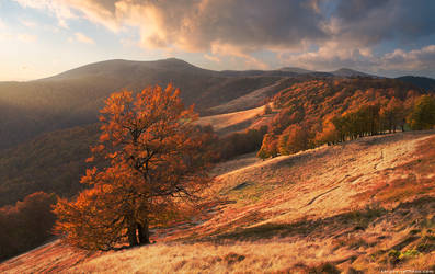 Autumn forest in Carpathian Mountains