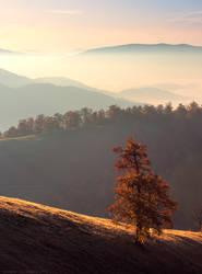 Lonely autumn tree in Carpathians by Sergey-Ryzhkov