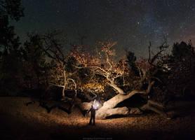 Great oak in the night