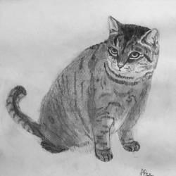 Feline by Alayaphi24
