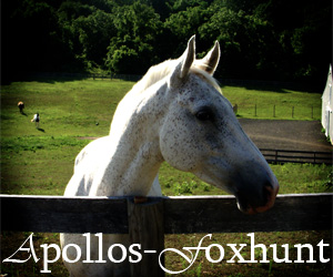 Apollos-Foxhunt's Profile Picture