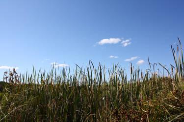 Grassy Background by blueangelstock