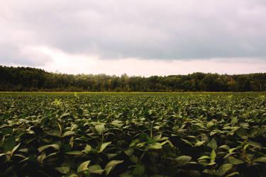 gloomy field stock by blueangelstock