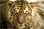 relaxing liger