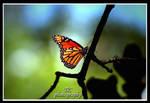 Shining beautiful by TlCphotography730