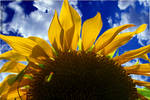 Sunny day ( revised ) by TlCphotography730