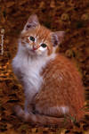 Fall kitten
