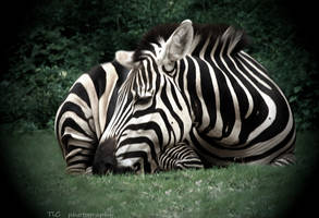 Sleeping n peaceful by TlCphotography730