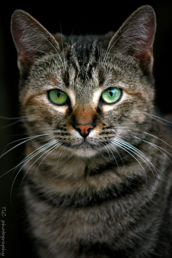 Who says a stray ins't pretty ?? by TlCphotography730